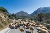 Car on a mountain road surrounded by a herd of sheep.  Crete, Greece