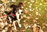 Beautiful dog with collar in autumn park