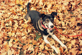 Beautiful dog with collar in autumn park © 5second