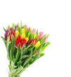 Tulip flowers bouquet isolated white background