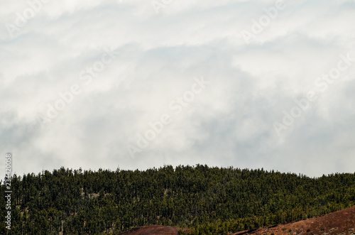 High Clouds over Pine Cone Trees Forest - 234420058