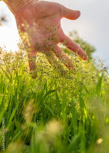 Zielona trawa w ręce w naturze w wiośnie