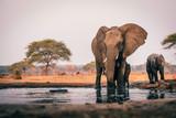 Elefantenkuh mit Jungem am Wasserloch, Senyati Safari Camp, Botswana © Michael