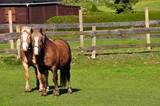 Pferde auf der Weide © Jutta Adam