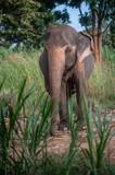 elephant farm in Thailand