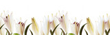 Lilies white flowers seamless pattern on a white