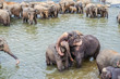 elephants in the river in Pinnawella - 234457488