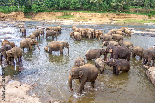 hugging elephants in the river in Pinnawella