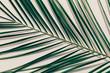 Green tropical leaf in a close-up