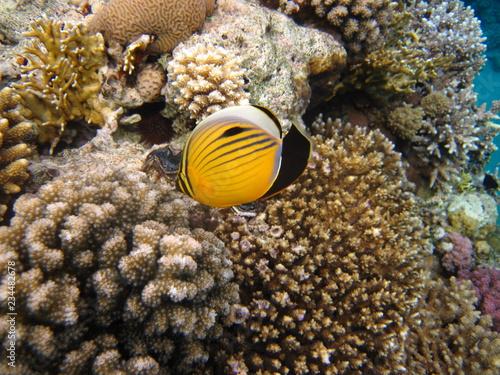 fototapeta na ścianę fish on coral reef