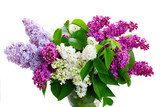 Fresh lilac flowers in bright colors isolated over white background - 234496476