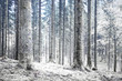 Beautiful winter season cold snowy forest landscape.
