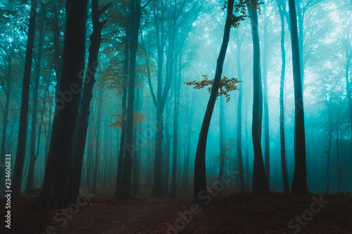 Lonely tree in foggy forest under blue mist and light - 234606833