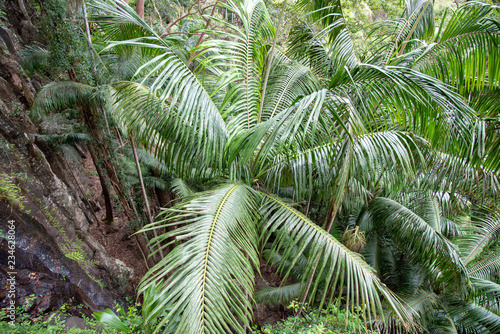 Palm, Mt Tamborine, Queensland