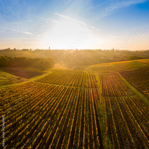 Aerial view, Vineyard Sunrise in autumn, Bordeaux Vineyard, France - 234643000