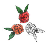 Tree roses isolated on white background. Graphic elements. Floral form. Nature set. Colored and uncolored.