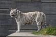 wildlife wild zoo madrid
