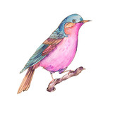 Сolorful watercolors birds isolated on white background - 234763242