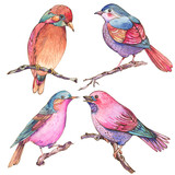 Set of colorful watercolors birds isolated on white background - 234763293