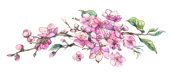 Watercolor spring vintage pink blooming branches of cherry peach, pear, sakura, © depiano