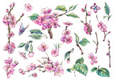 Watercolor spring set of vintage floral elements blooming branches of cherry - 234764487
