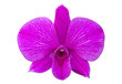 Purple phalaenopsis orchid flower isolated on white with clipping path