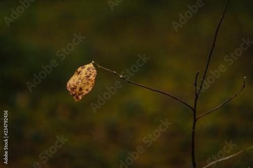 dark foliage on the forest floor in autumn