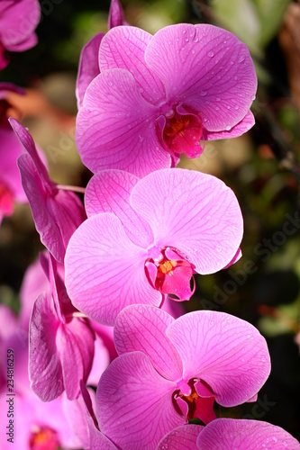 close up orchid flower - 234816259