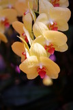 close up orange orchid flower in nature background © witsanu