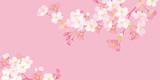 桜 背景イラスト - 234833239