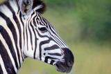 Botswana Tiere Natur Afrika © Michael