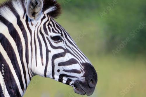 Plakat Botswana Tiere Natur Afrika