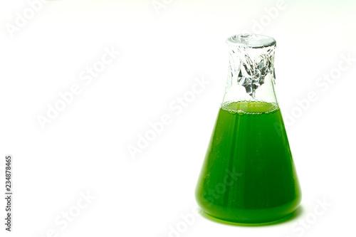 Marine plankton or Microalgae culture into  Erlenmayer flask in Scientific laboratory