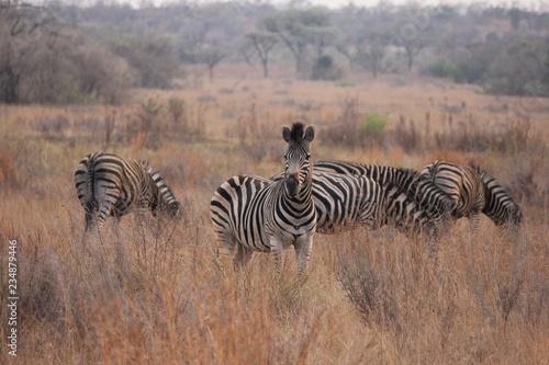 Afrika Botswana Natur Tiere - 234879446