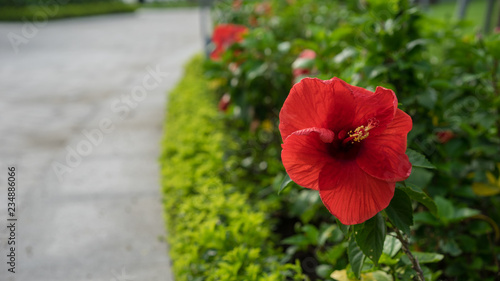 red flowers in the garden - 234886066