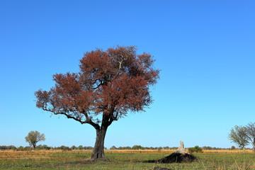 Landschaft im Okavango Delta in Namibia