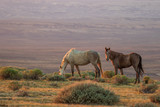Wild Horses in the Colorado Desert in Summer © natureguy