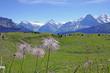 Leinwandbild Motiv schynige platte, berner alpen, schweiz