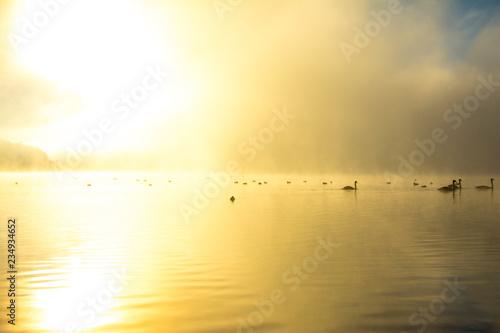fototapeta na ścianę nature, desktop background, Board background, fog, sun, swans, white, lake, green, water, autumn, trees