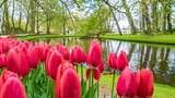 Fresh Pink Tulip Flowers Garden © Aris Suwanmalee