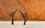 Dead acacia Trees and red dunes in Deadvlei. Sossusvlei. Namib-Naukluft National Park, Namibia. - 234970816