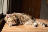 lazy cat sleeping © ChenPG