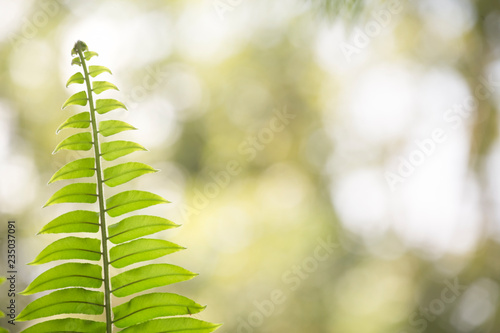Fern leaf with blurred nature background.Morning concept.
