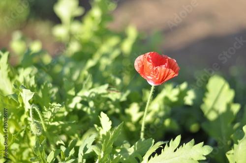 Red flower in the garden - 235104697