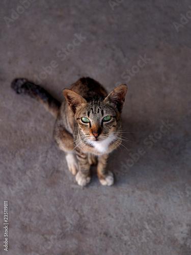 fototapeta na ścianę Cat