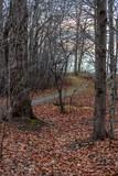Walking path in woods