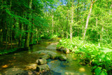 A stream near in Lake Biograd