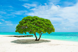 Beautiful landscape with tropical tree