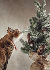 Pretty ginger cat interestedly exploring vintage decorative Christmas tree with cones