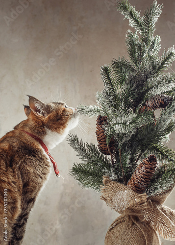 Pretty ginger cat interestedly exploring vintage decorative Christmas tree with cones - 235207040